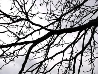 Bare-trees-against-a-winter-sky-always-an-inspiration