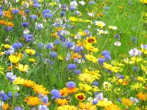 A swathe of flowers