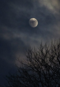West Dean College - moonlight